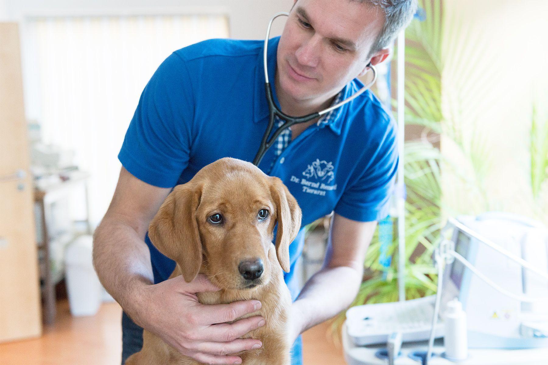 Tierarzt Notdienst Regensburg
