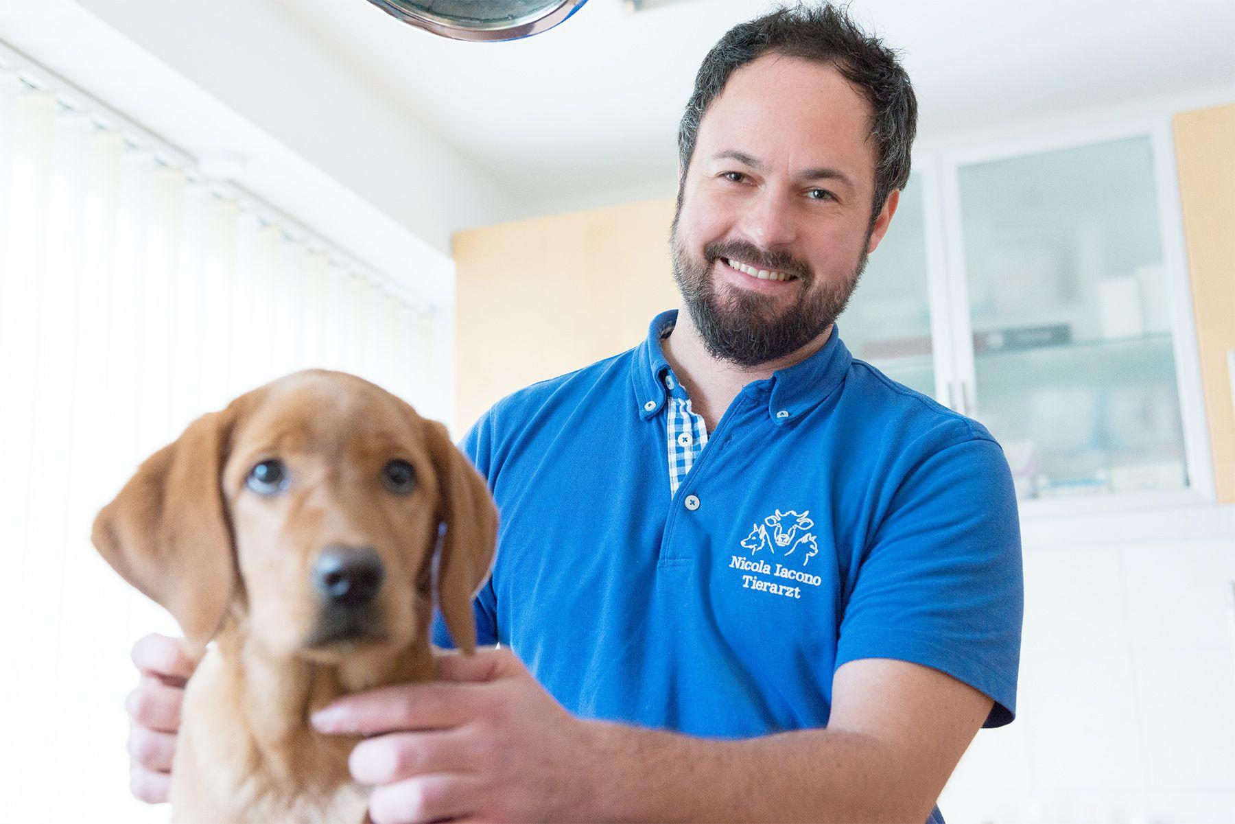 Tierarzt Regensburg Notdienst